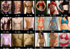 Visual Representation of Body Fat %